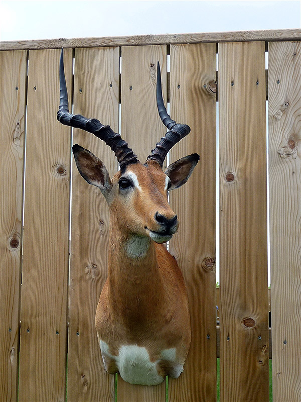 Winnipeg Manitoba Taxidermist | Darren Shipp