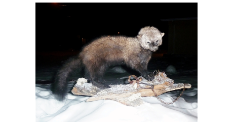 Manitoba's Home for Taxidermy. Here are a few reasons why: